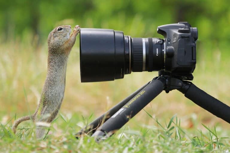 squirrel camera